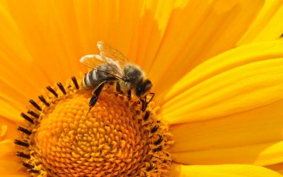 Umgang mit Bienen und Wespennestern im Garten